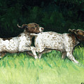 German Shorthaired Pointer Pups by Charlotte Yealey