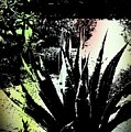 Giant Agave by Regina Arnold