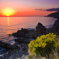 Giant Coreopsis Sunset 2 by Greg Clure