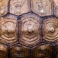 Giant Tortoise Carapace by Hakon Soreide