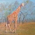 Giraffe - Safari - Summer 2008 by Wendy Hill