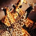Giraffe Family by Johnnie Boswell