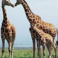 Giraffe Family by Sallyrango