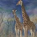Giraffes by Sharon Farber