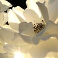Gleaming White by Chris Brannen