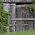 Glengarry Barn Doors by Jacqueline Milner