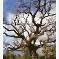 Gnarled Tree Open Sky by Ron Alderfer