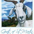 Goats Of St. Maarten- Andre by Cindy D Chinn