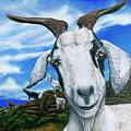 Goats Of St. Martin by Cindy D Chinn