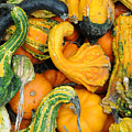 Gourds by Terese Loeb Kreuzer