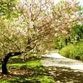 Grace Of Magnolia by Zois Shuttie