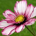 Graceful Bloom by Julie Behm