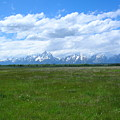 Grand Tetons Meadow by George Jones