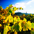 Grape Leaves And The Sky by Elaine Plesser