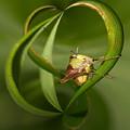 Grasshopper Twist by Jouko Lehto
