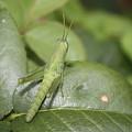 Grasshopper by Paula Coley