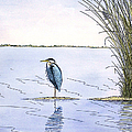 Great Blue Heron by Charles Harden