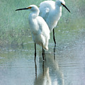 Great Egrets by Betty LaRue