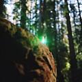 Green Burl by Steven Wirth