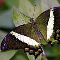 Green Butterfly by Michael Peychich