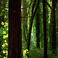 Green Forest by Carlos Caetano