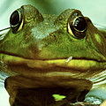 Green Frog by Michael Peychich