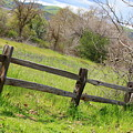 Green Hills And Rustic Fence by Carol Groenen