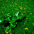 Green On Green by Ron Plasencia