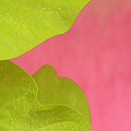 Green On Pink 1 by Art Ferrier