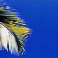 Green Palms Blue Sky  by Lyle Crump