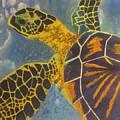 Green Sea Turtle by Bryan Zingmark