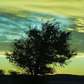 Green Sunset by Terry Wieckert