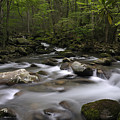 Greenbrier In The Great Smoky Mountains by Darrell Young
