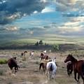 Greener Pastures by Bill Stephens