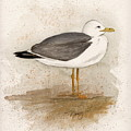 Gull by Nancy Patterson