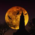 Halloween Moon by Bill Cannon