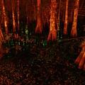 Halloween Woods by Florene Welebny