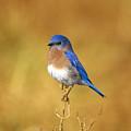 Happy Blue Bird by John Harmon
