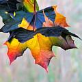 Harbinger Of Autumn by Sean Griffin