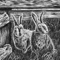 Hare Line  by Peter Piatt