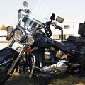 Harley Classic by Elizabeth Chevalier