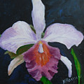 Hartford Orchid by Barbara Harper