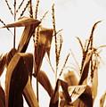 Harvest Corn Stalks - Gold by Angela Rath