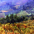 Harvest Time At The Vineyard by Elaine Plesser