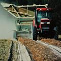 Harvest Time by Lori Mellen-Pagliaro