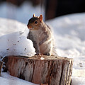 Has Anyone Seen My Nuts by Lori Tambakis
