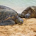Hawaiian Green Sea Turtles 1 - Oahu Hawaii by Brian Harig