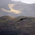 Hawk In The Welsh Mountains by Angel Ciesniarska