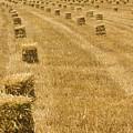 Hay Field by Juan Silva
