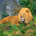 He Lion by Lisa Rose Musselwhite